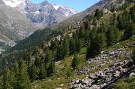Thema<h2>Der Wald schützt</h2><p>Ein Fünftel unserer Wälder hat eine Schutzfunktion</p>
