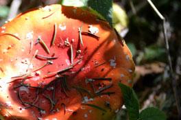 Thema<h2>Artenvielfalt</h2><p>Totholz birgt jede <br>Menge Leben</p>
