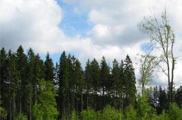 Thema<h2>Klimaschutz</h2><p>Kohlenstoffvorräte in Österreich</p>